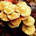 Mushrooms by Cristina Stefan