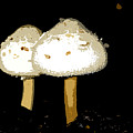Mushrooms For Two Work Number 11 by David Lee Thompson