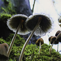 Mushrooms From Below by Lorraine Baum