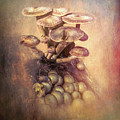 Mushrooms Gone Wild by Marvin Spates