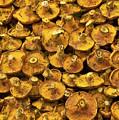 Mushrooms In Spain by Steven Sparks