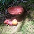 Mushrooms In Spotlight  by Joe D Dry
