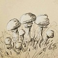 Mushrooms On Toned Paper With Charcoal by Melissa Brazeau
