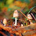 Mushrooms  by Robert Meanor