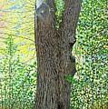 Muskoka Maple by Kenneth M Kirsch