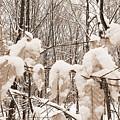 Muskoka Winter 6 by Kathi Shotwell