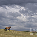 Mustang And Stormy Sky by Jean-Louis Klein & Marie-Luce Hubert