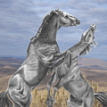 Mustang Battle by Russ  Smith