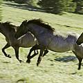Mustang Mares by Richard Rivard