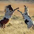 Mustang Rivalry by Clicking With Nature