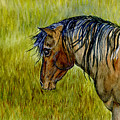Mustang Stallion by Jim And Emily Bush