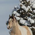 Mustang Winter by Kent Keller