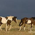 Mustangs In Nevada by Jean-Louis Klein & Marie-Luce Hubert
