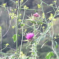 Mustard And Thistle by Suzanne Leonard