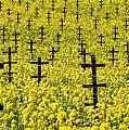 Mustard Color In The Vineyard  Napa Ca. by Jon Cretarolo