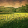 Mustard Grass by Laura Macky