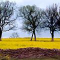 Mustard by Sam Davis Johnson