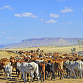 Mustering Passed The Cockburn Ranges by Penney Hayley