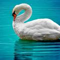 Mute Swan 4 by Brian Stevens