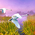 Mute Swans Over Marshes by Laura D Young