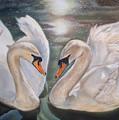 Mute Swans - River Severn by Irisha Golovnina
