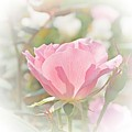 Muted Rose  by Luther Fine Art