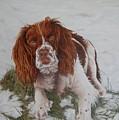 Muttley-the Best Springer Spaniel by Pauline Sharp