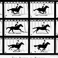 Muybridge: Horse by Granger