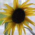 My Beautiful Sunflower by Sharon Denisewicz