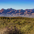 My Catalina Mountains by David Levin
