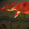 My Daylilies 2 by Lenore Senior