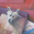 My Dog by Alfredo DeCurtis