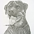 My Dog Kito by Gregory Hayes