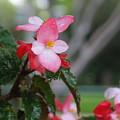 My English Garden 8 by Hazel Holland