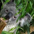My Eucalyptus by Nancy Morrison