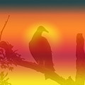 My Favorite Bird by Lisa Stanley