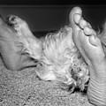 My Favorite Feet by Jemmy Archer