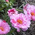 My Favorite Flower by Jeanette Oberholtzer