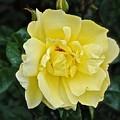 My Favorite Flower by Katy Granger