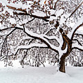 My Favorite Tree In The Snow by Janis Knight
