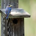 My First Bluebird by JG Thompson
