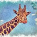 My Friend The Giraffe by John M Bailey