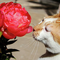 My Kitty In Love With A Peony by Mariola Bitner