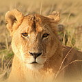 My Lion Eyes by Sue Long