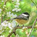 My Little Chickadee In The Cherry Tree by Jennie Marie Schell
