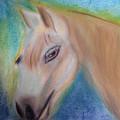 My Little Pony by Donna Blackhall