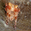 My Little Spider by Dora Stratton