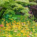 My Monet by Peter Olsen