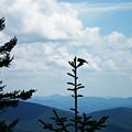 My Mountain Bird by Patricia Motley