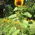 My Own Sun In My Backyard  by Viktoriya Sirris